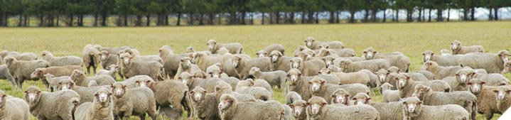 Identify the key production traits that drive your sheep enterprise profit