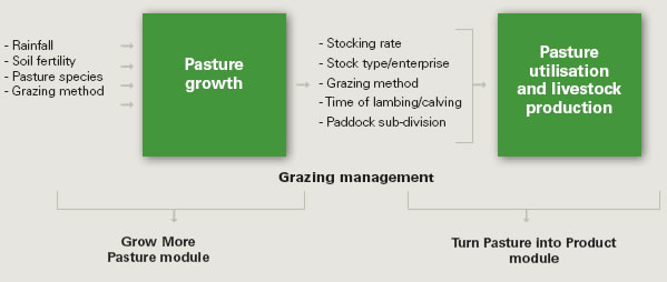 Pasture production and grazing management in context