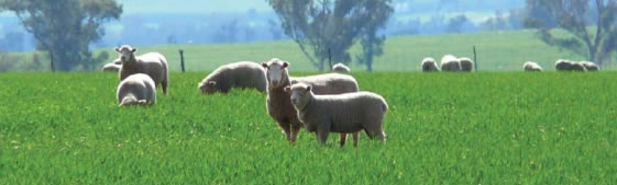 Zoonotic diseases of sheep