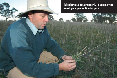 Monitor pastures regularly to ensure you meet your production targets