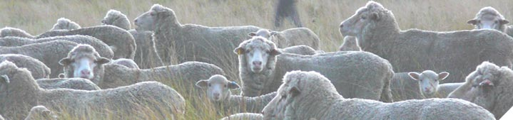 Manage your ewes to improve lamb surviva